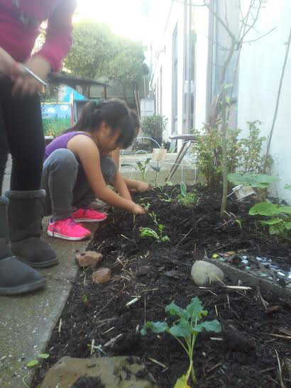 Planting Potatoes in the Garden