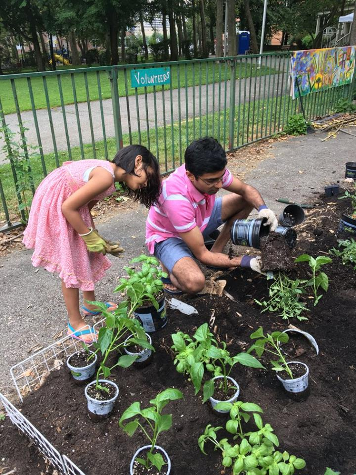 Volunteers planting trees in RI Living Library & Think Park on Roosevelt Island Day, June 17, 2017